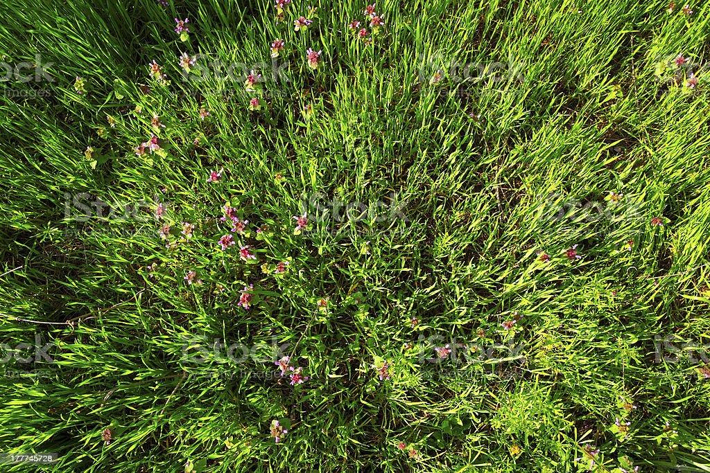 緑の芝生の上からフラワーアレンジメント、写真 ロイヤリティフリーストックフォト