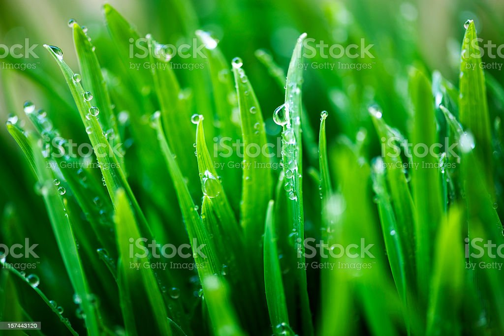 green grass with raindrops royalty-free stock photo