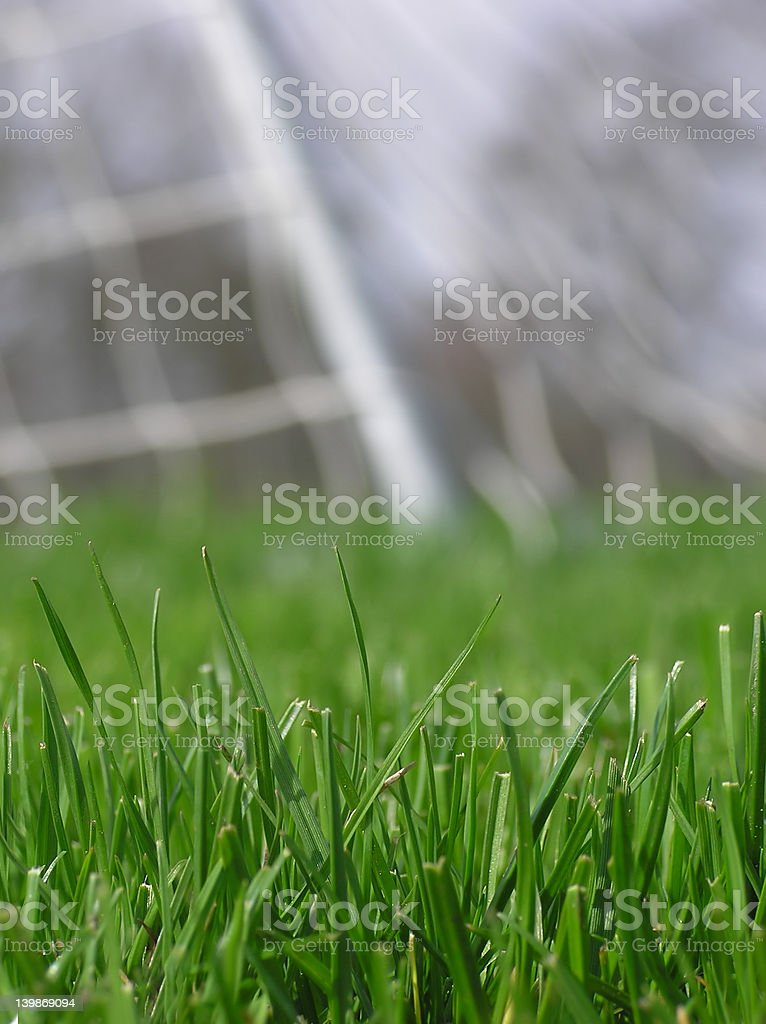 green grass with soccer net royalty-free stock photo