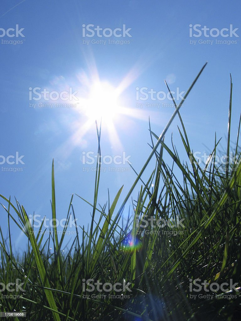 Green grass with sun on blue sky royalty-free stock photo