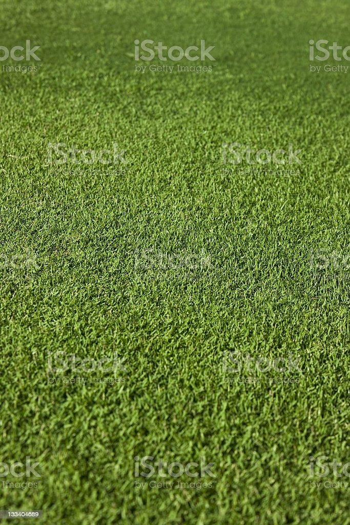 Green grass XXL royalty-free stock photo