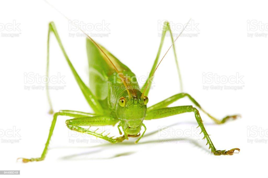 Green grasshopper ... stock photo