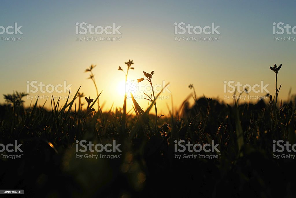 green grassland on sunset stock photo