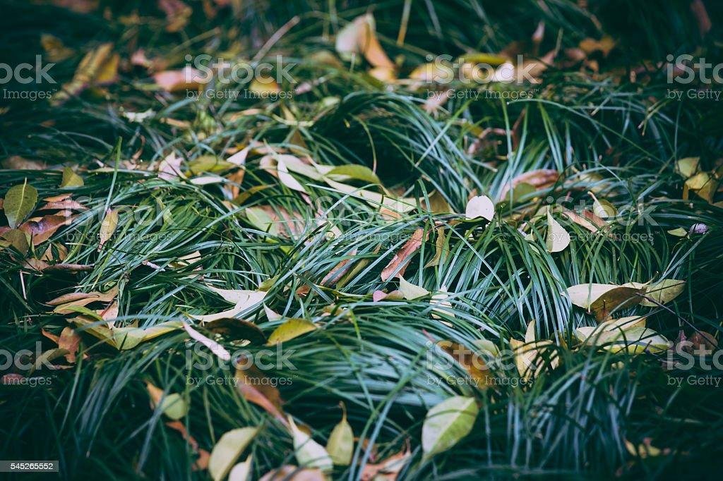Green grassland stock photo