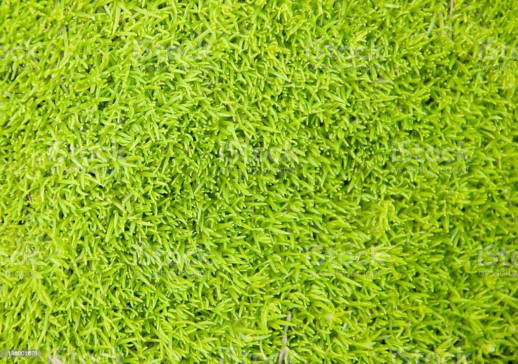green grassy background stock photo