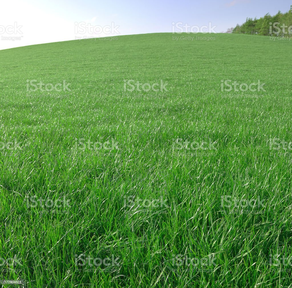 Green grassy hill with sky background royalty-free stock photo