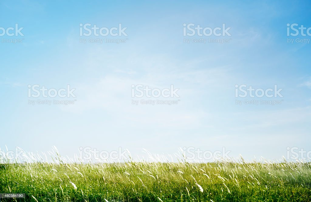 Green Grassy Park Field Outdoors Concept stock photo