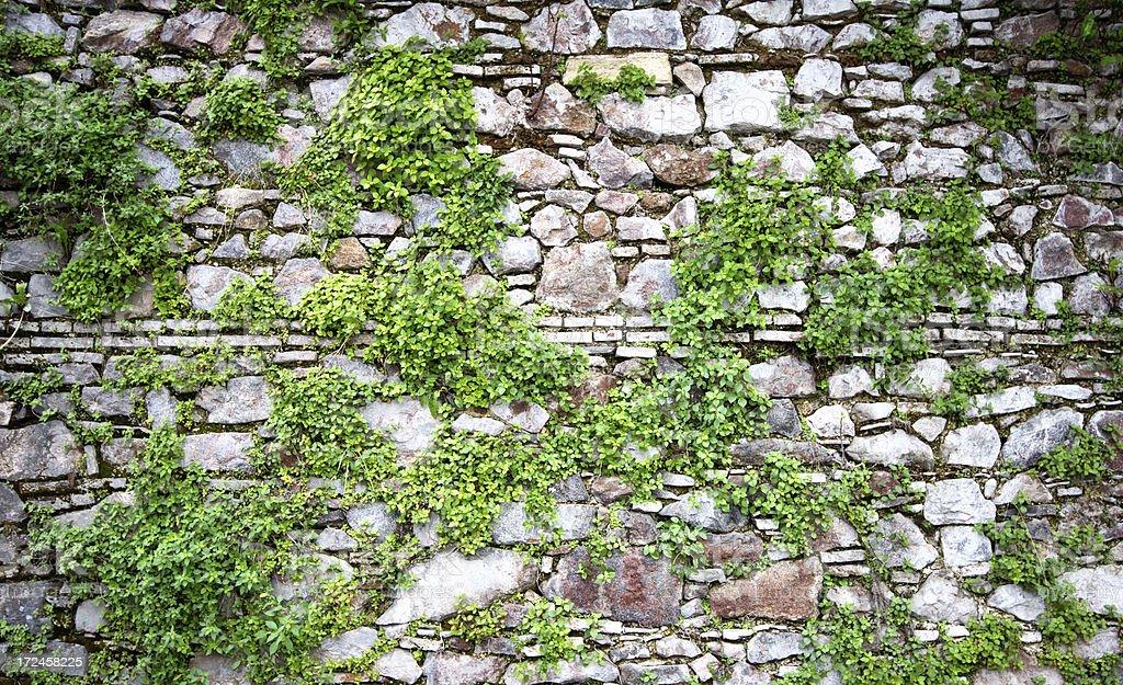 Green grassy stone wall background royalty-free stock photo