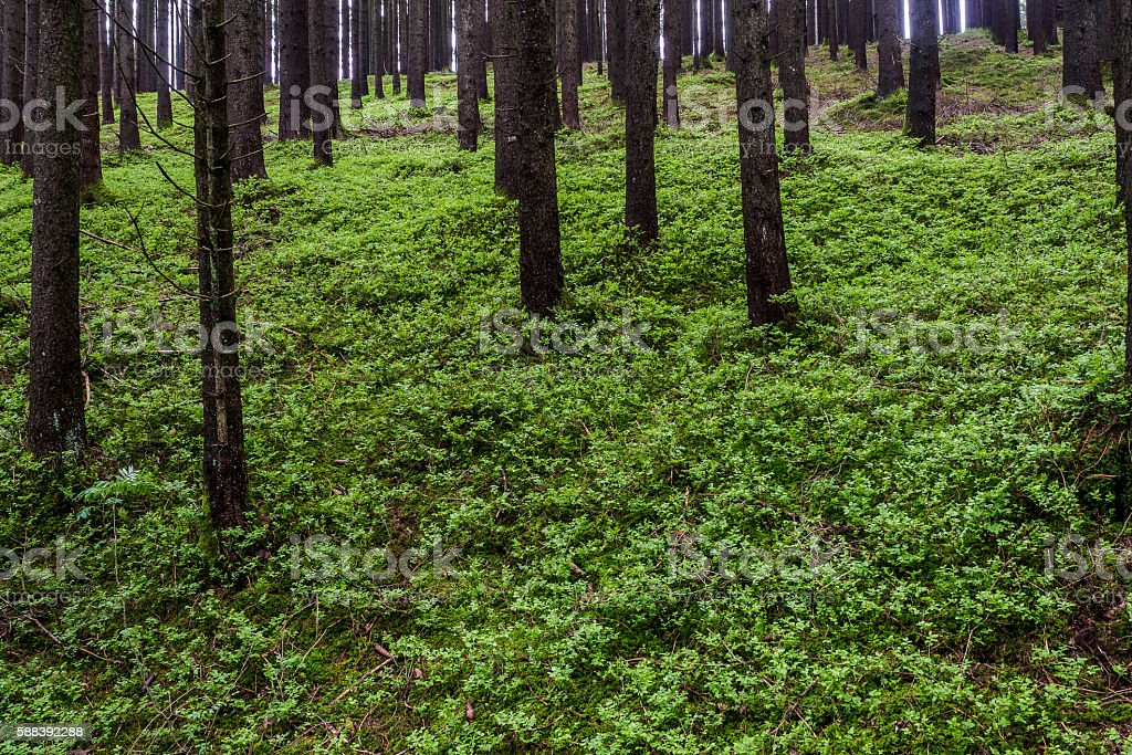 Green ground stock photo