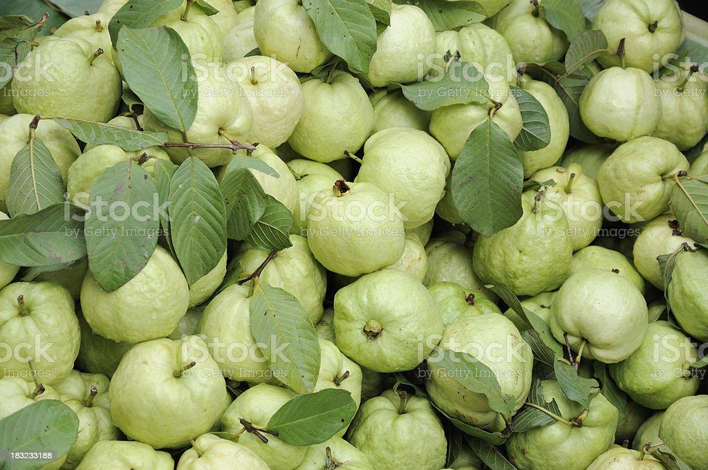 Green Guava stock photo