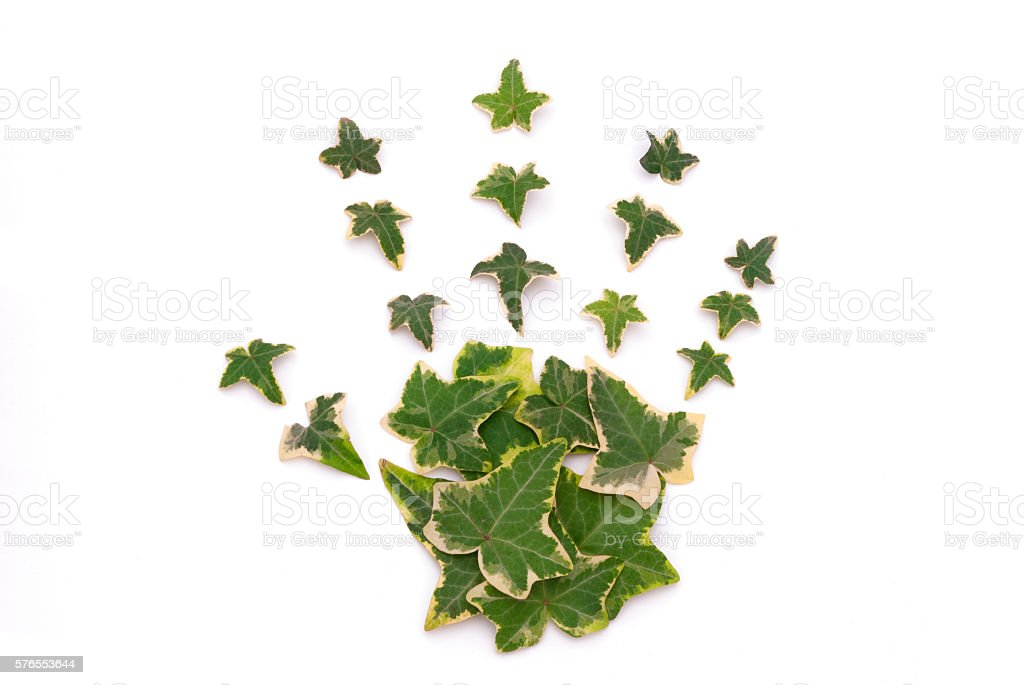 Green hand (leaves hand) stock photo