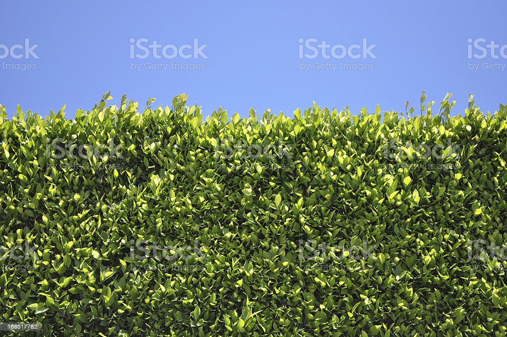 Green Hedge Fence royalty-free stock photo