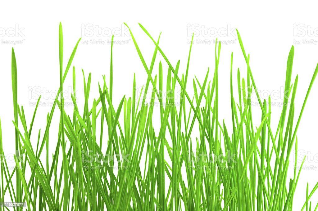 green herb stock photo