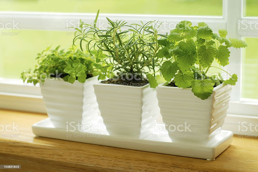 Green herbs on a window sill stock photo