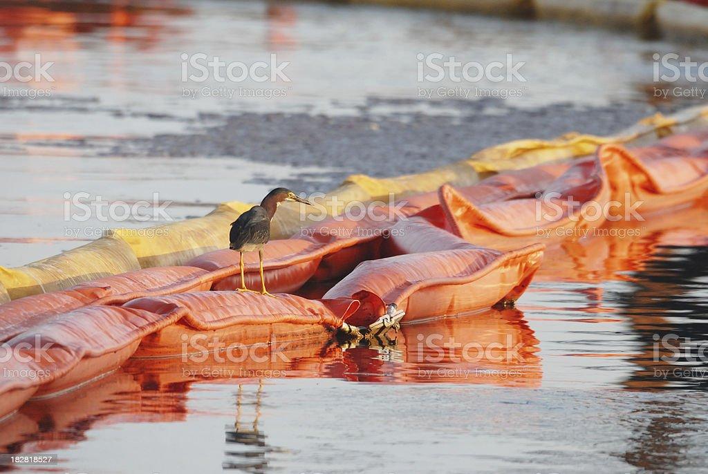 Green Heron Sitting on Oil Boom royalty-free stock photo