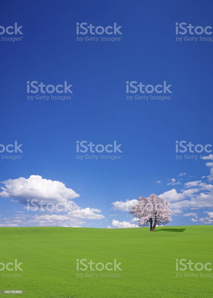Green hill and cherry tree royalty-free stock photo