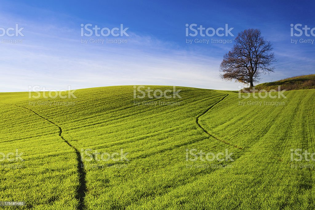 Green Hill and Tree Landscape royalty-free stock photo