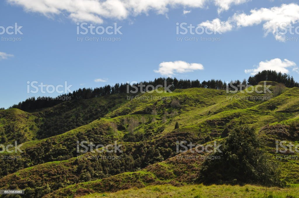 Green Hills in New Zealand stock photo