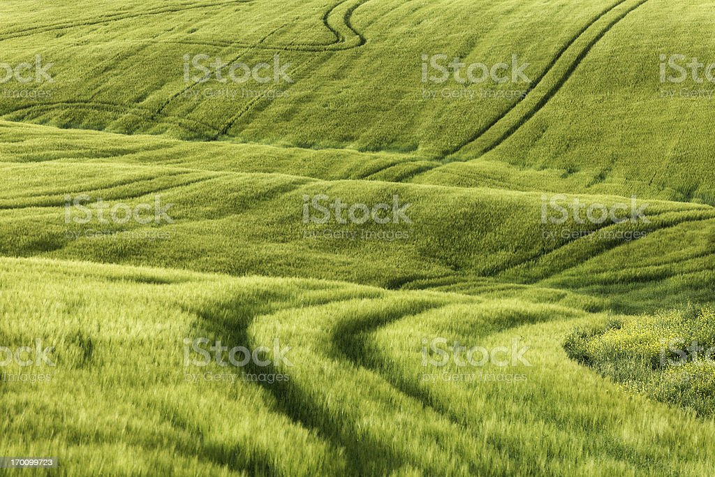 Green hills of Tuscany royalty-free stock photo