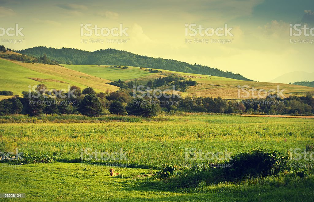 Green hills foto de stock libre de derechos