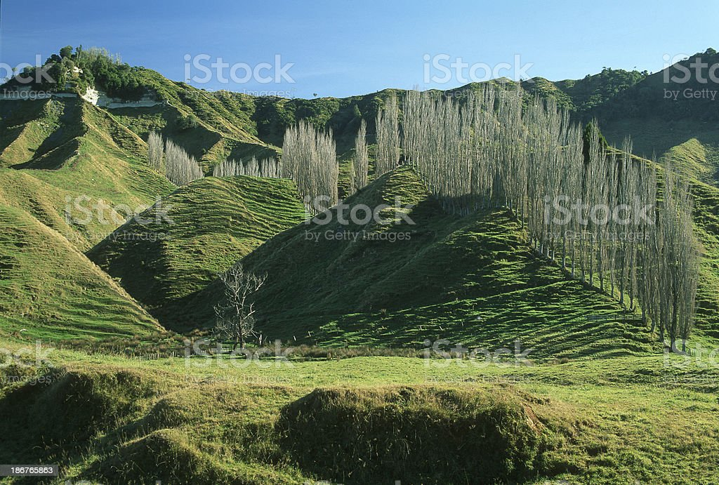 Green hills with a tree row going up stock photo