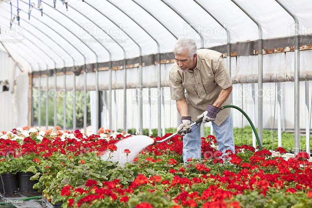 Green house Gardening stock photo