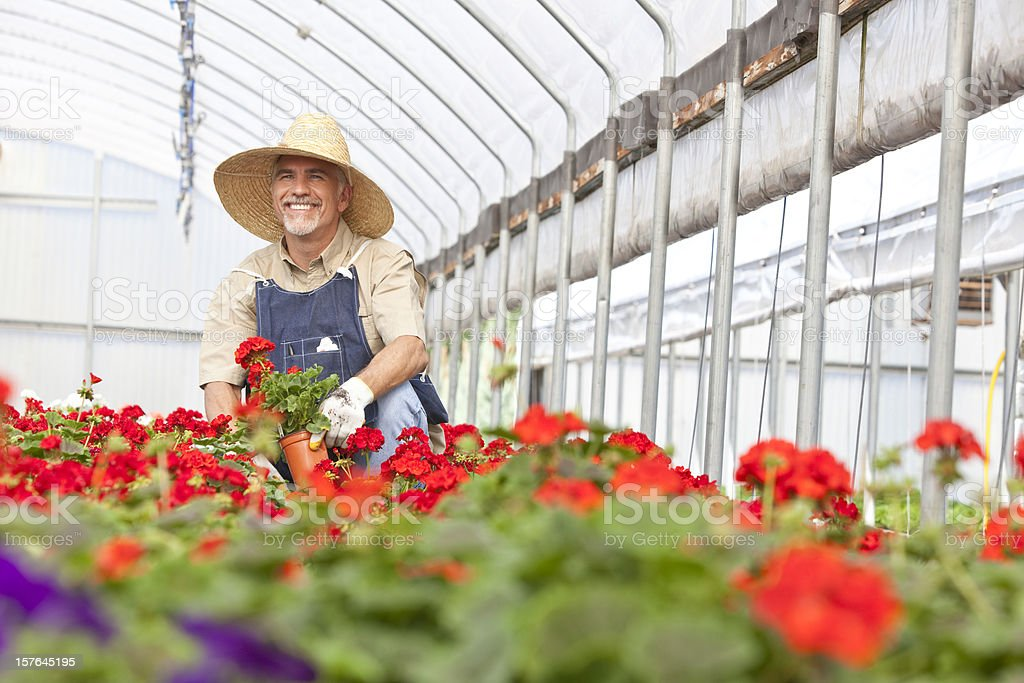 Green house Gardening royalty-free stock photo