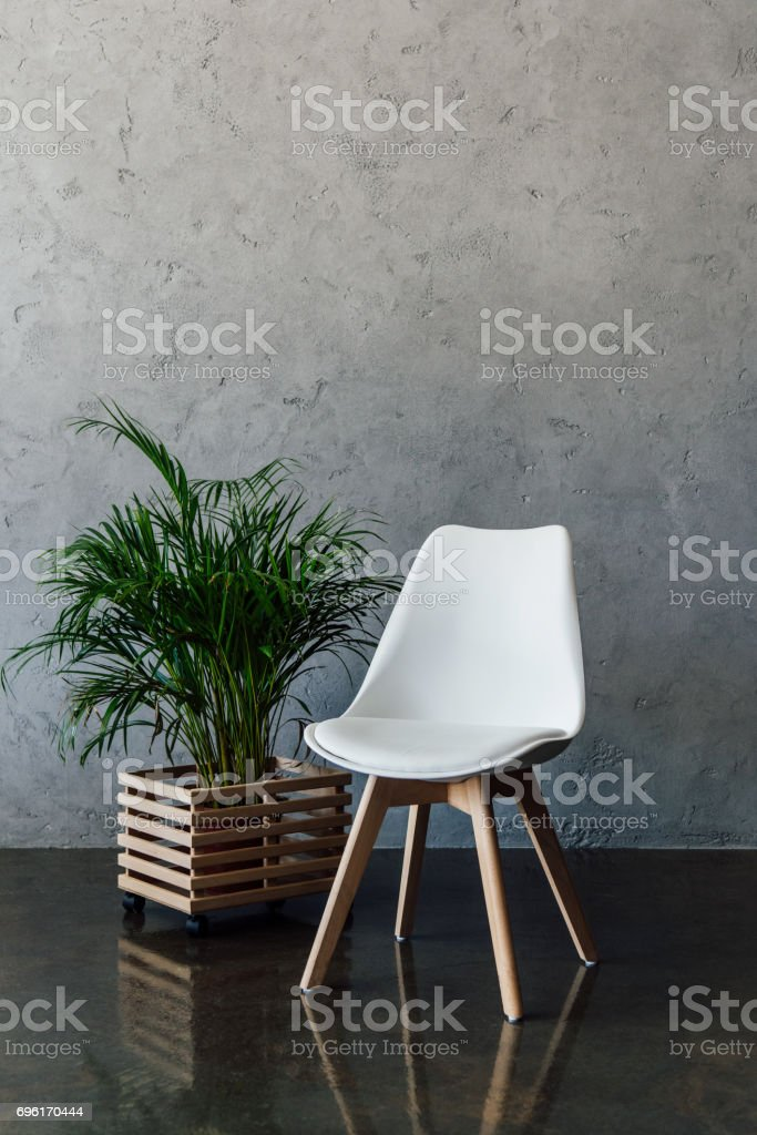 Green houseplant in pot and empty white chair indoors stock photo