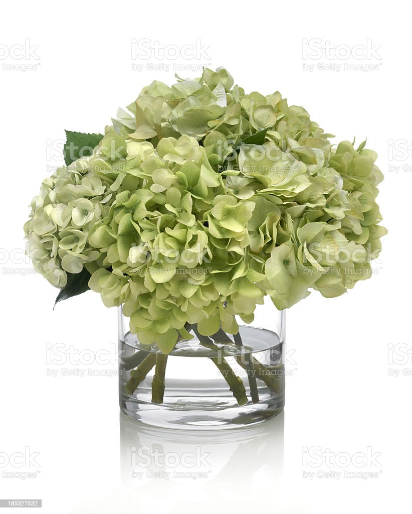 Green Hydrangea Bouquet on white background stock photo