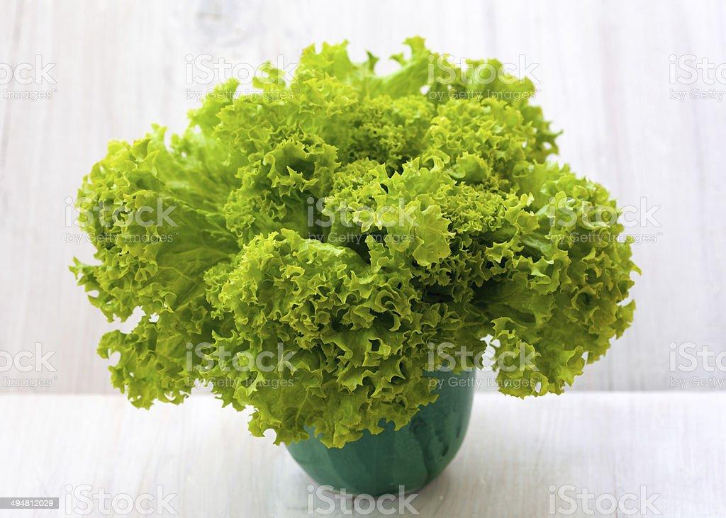Green iceberg lettuce royalty-free stock photo