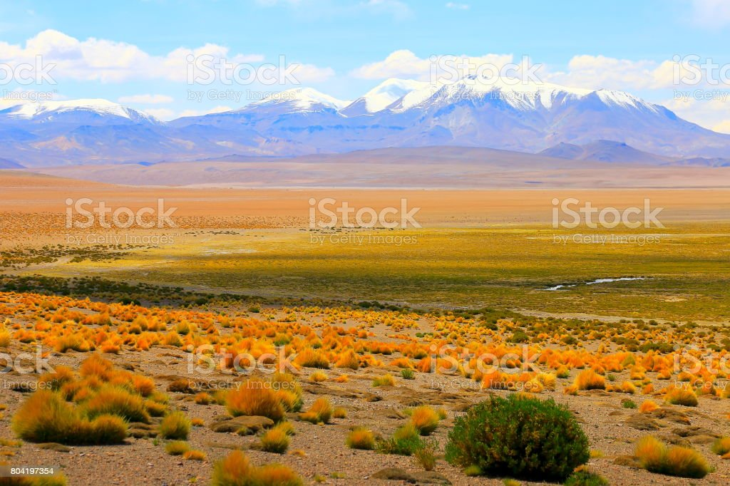 Green idyllic Salar de Tara –  pastel colored steppe,  Volcanoes and Atacama Desert altiplano, volcanic landscape panorama – San Pedro de Atacama, Chile, Bolívia and Argentina border stock photo