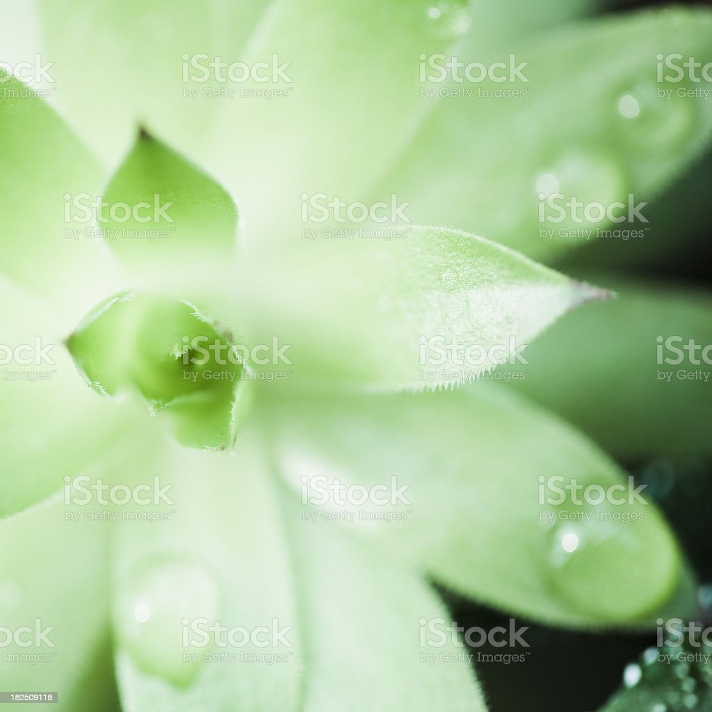 Green in Spring,Aloe Sap royalty-free stock photo