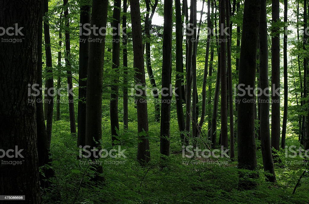 Green in the woods stock photo
