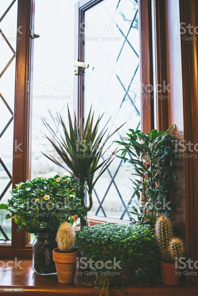 Green Indoor Plants on a ledge by an open window stock photo