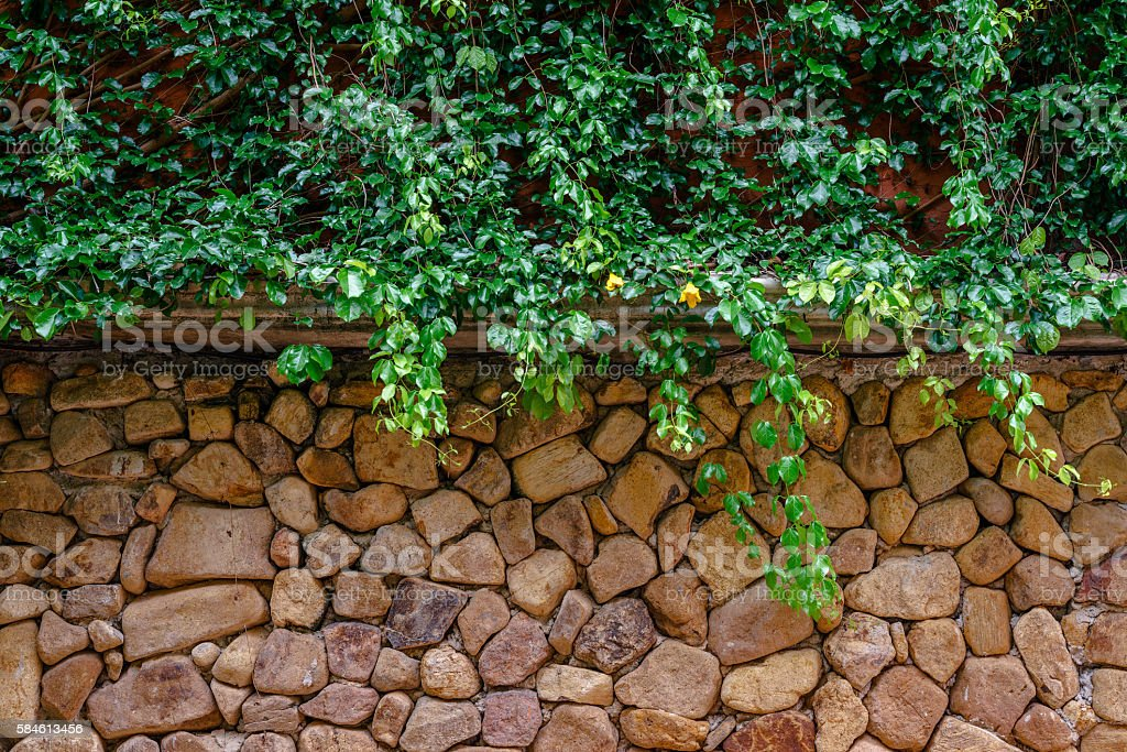 Green ivy covering stone wall photo libre de droits