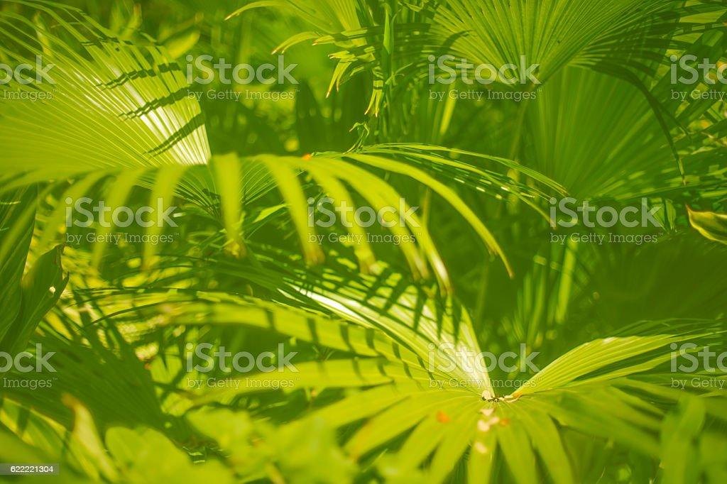 Green Jungle Leafs stock photo