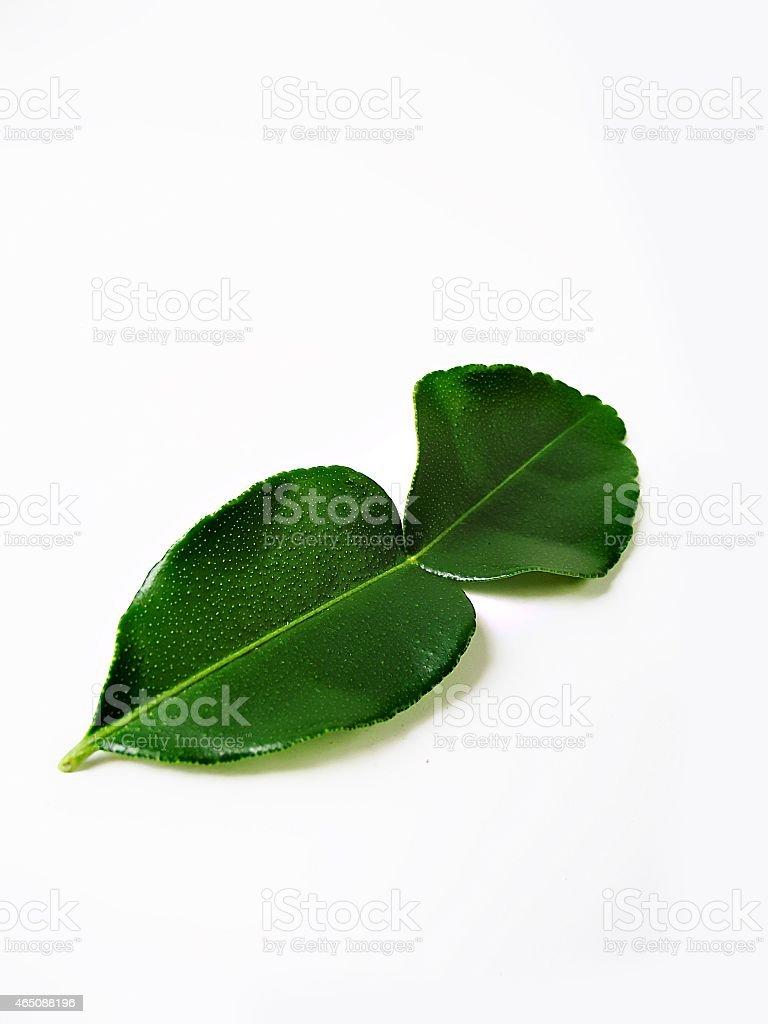 green Kaffir lime stock photo