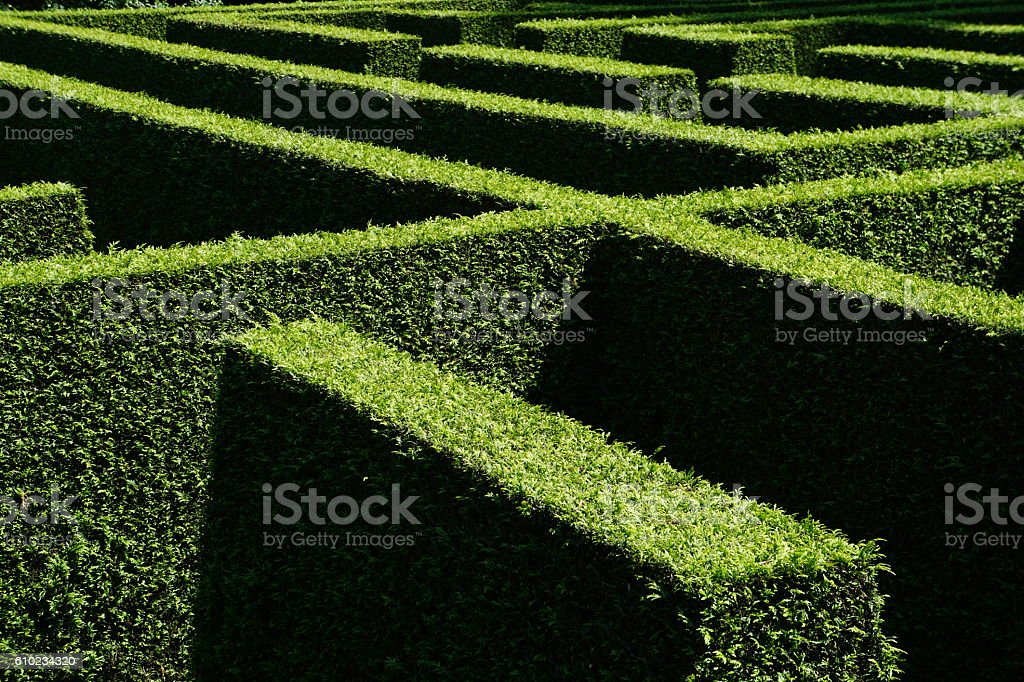 labyrinth of green hedges seen from above in bright sunlight with...