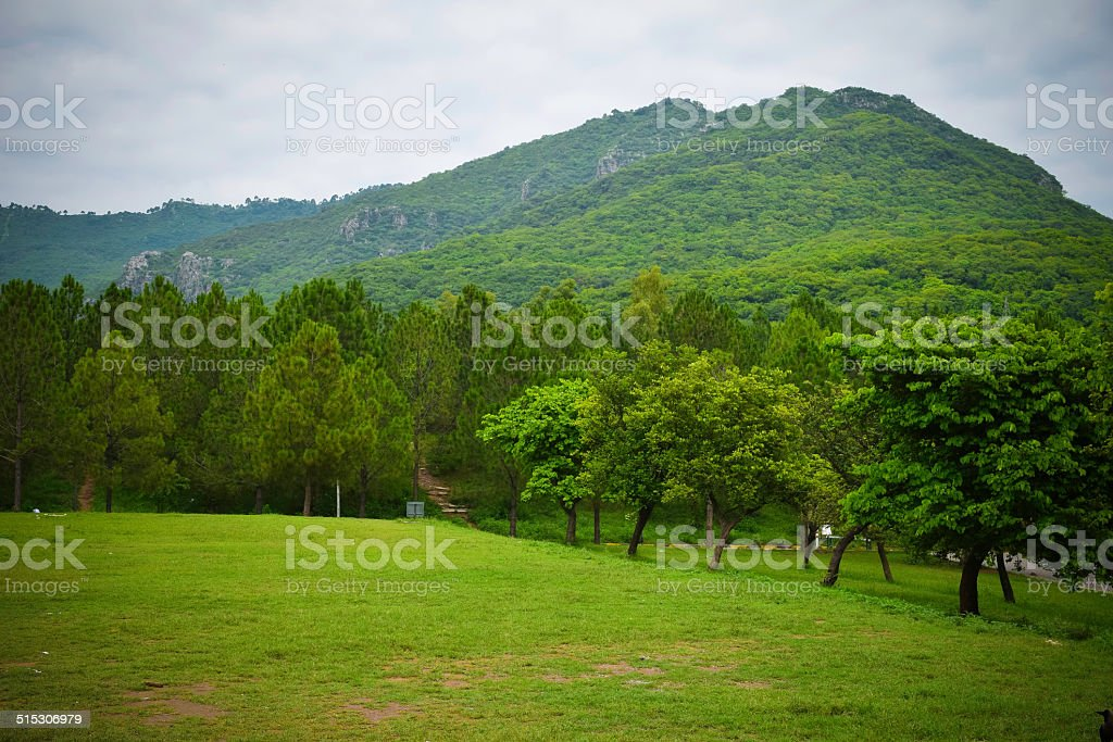 Green Landscape stock photo