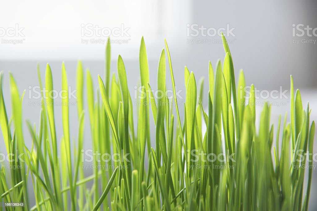 green lawn grass. royalty-free stock photo