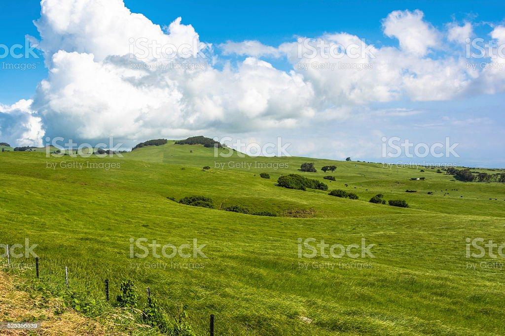 Green lawn in Big Island, Hawaii stock photo
