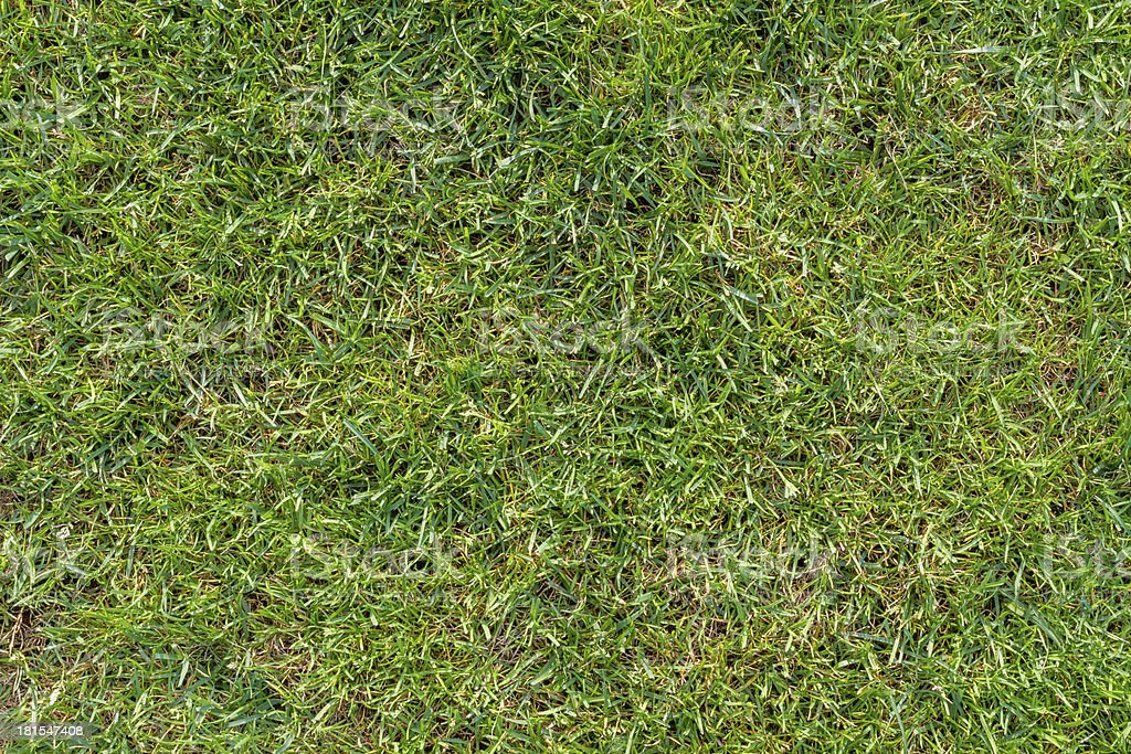 Green lawn isolated in plan view royalty-free stock photo
