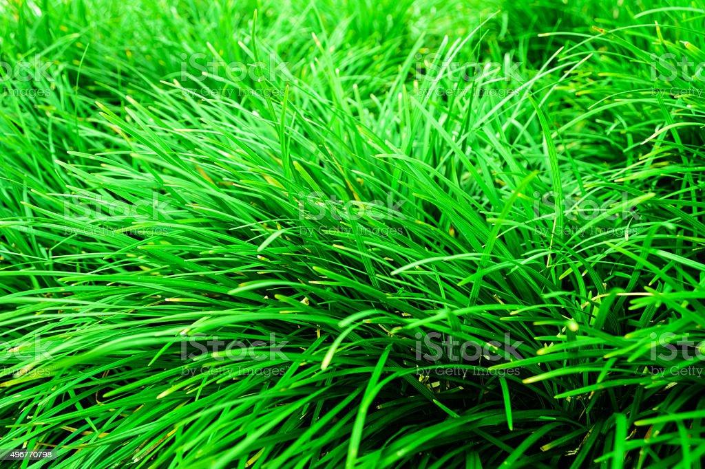 green lawn stock photo