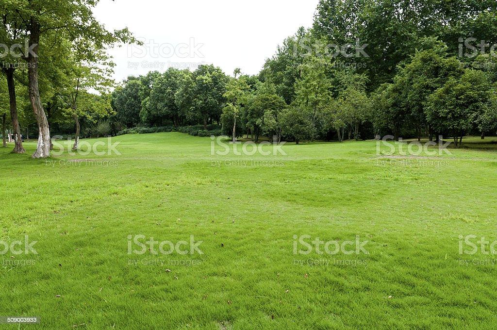 Green lawn royalty-free stock photo