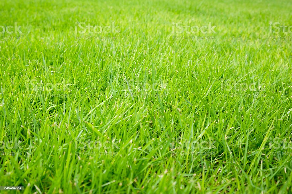 Green lawn. selective focus. soft focus. stock photo