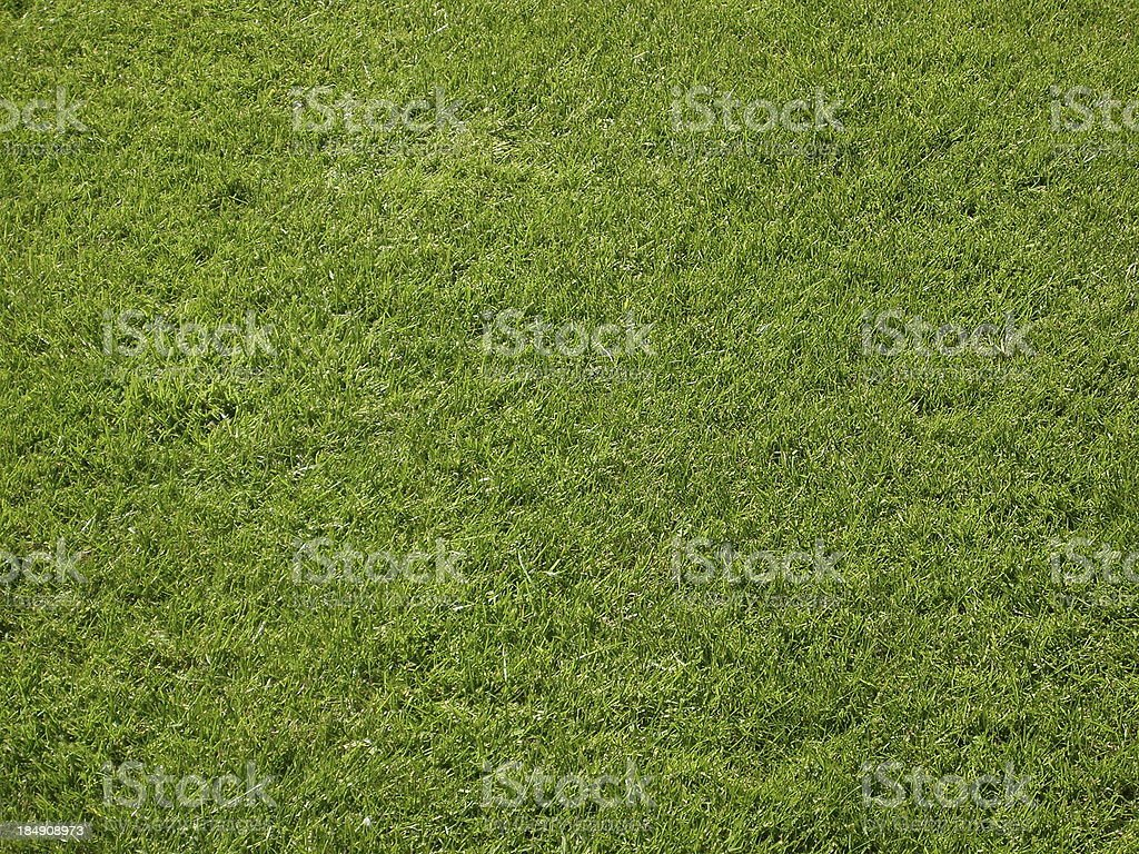 Green lawn Texture royalty-free stock photo