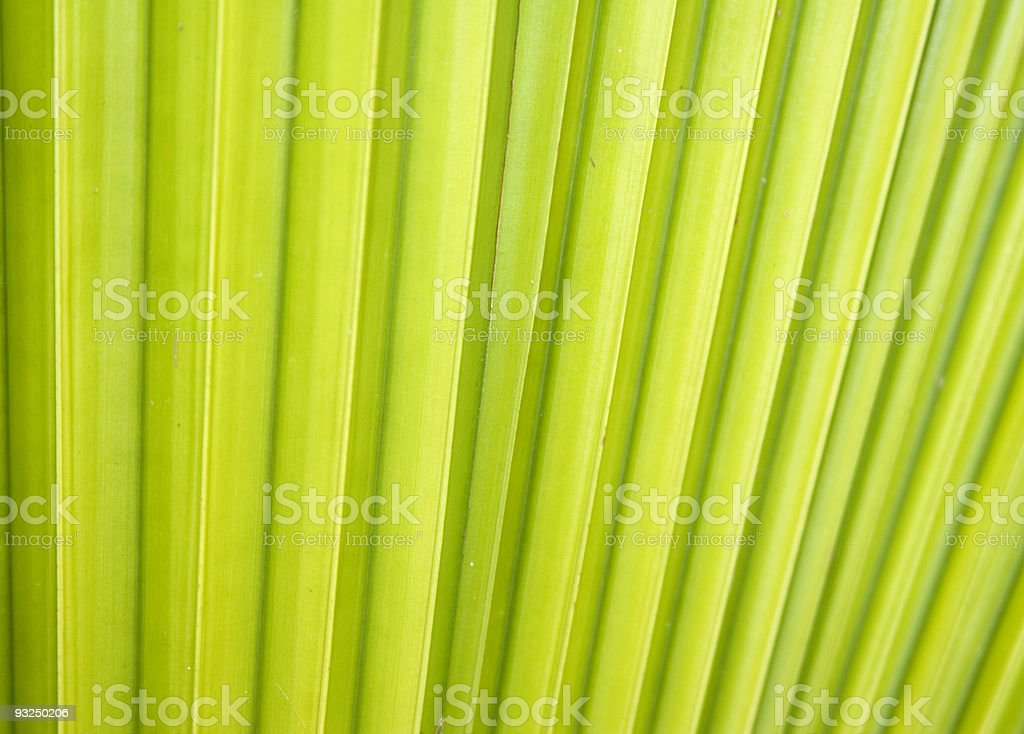 Green Leaf Abstract royalty-free stock photo