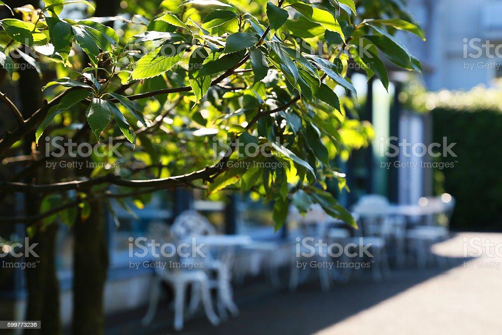 Green leaf and chair foto de stock libre de derechos
