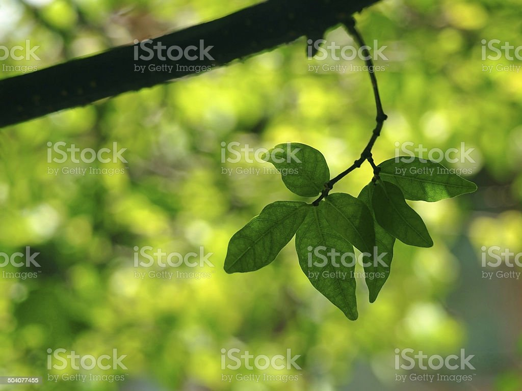 Green leaf and Natural bokeh stock photo