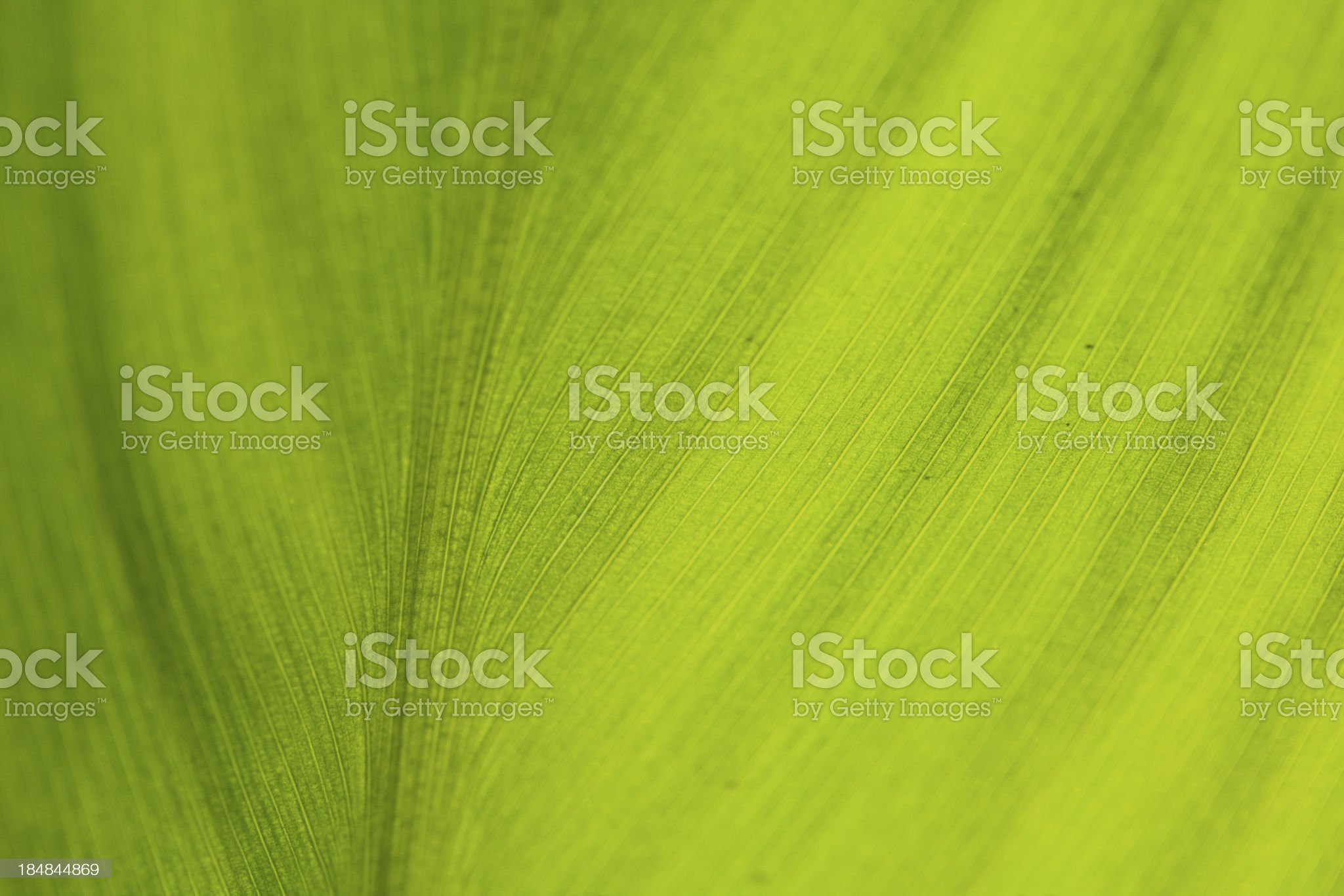Green leaf as background royalty-free stock photo